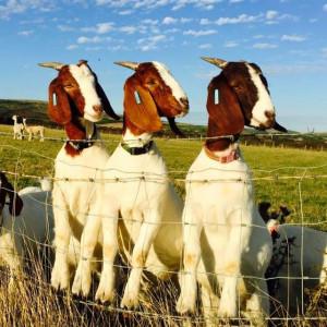 Grange Farm-Brighstone