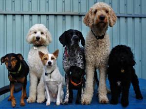 Swinton Dog Day Care