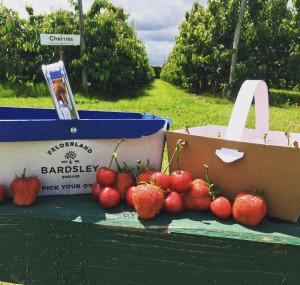 Felderland Farm Pick Your Own